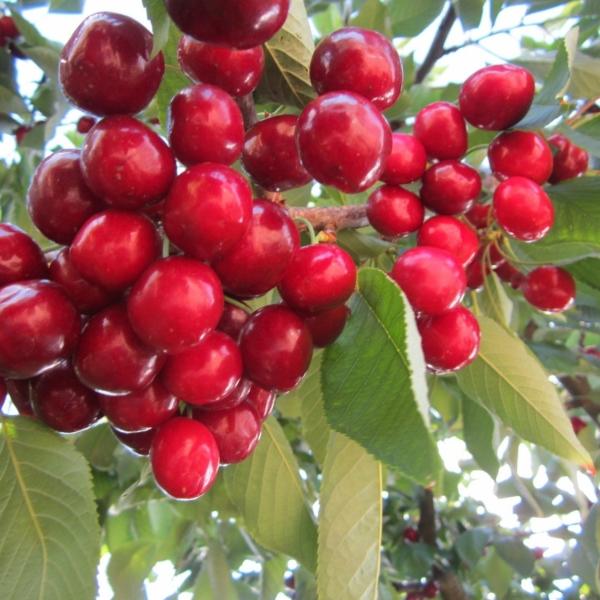 32_piante_da_frutto.jpg