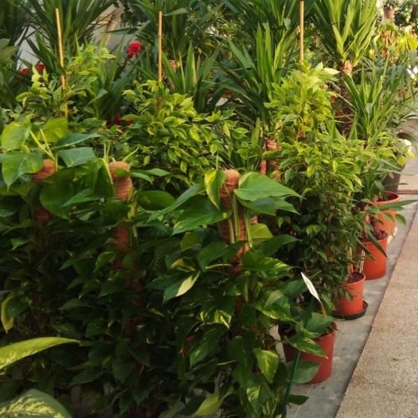 2_piante_interno_sezioni.jpg